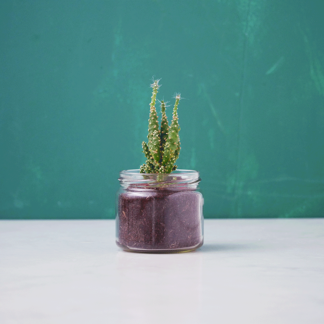 202002_How-to-Reuse-Pots_FA_1080x1080px.gif